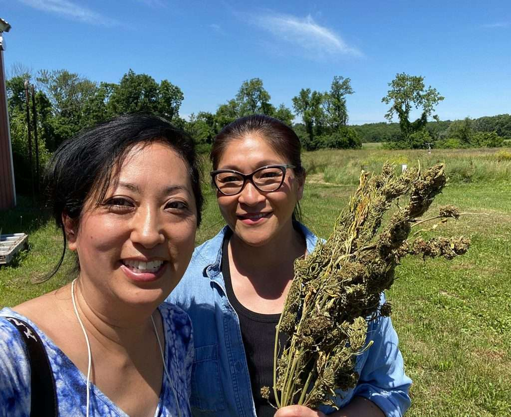 Risa and June cannabis