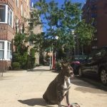 How I Created a Magnificent End…For My Dog