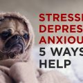 stress-depression-anxiety-therapy